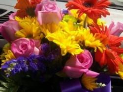 Dn Surprise Florist